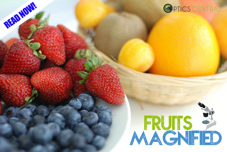 Celebrating National Science Week Day 6 - Fruits Magnified