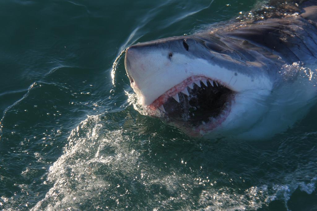 Australian shark lover reveals how you can spot the