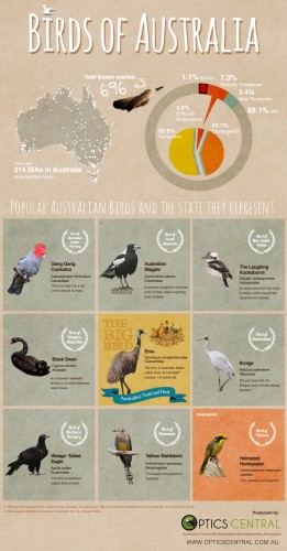 Birds of Australia [Infographic]