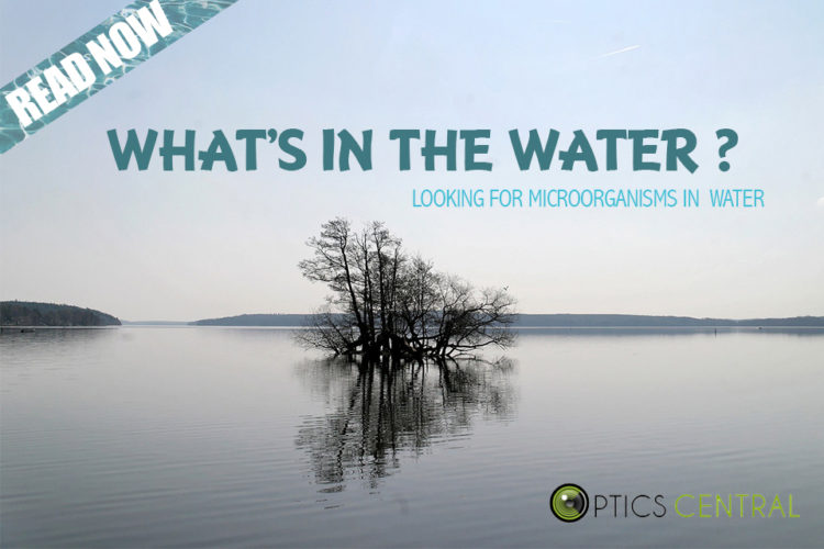 Celebrating National Science Week Day 5 - What's in the Water?