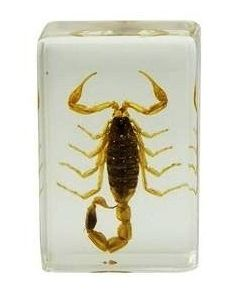 Saxon Resin Preserved Specimen- Scorpion