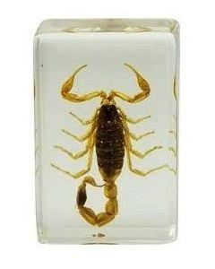 Saxon Resin Preserved Specimen- Scorpion